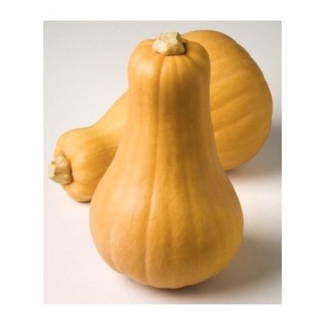 Butternut / 1 kg